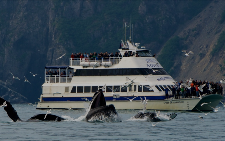 Sightseeing day cruises from Seward, AK marina.
